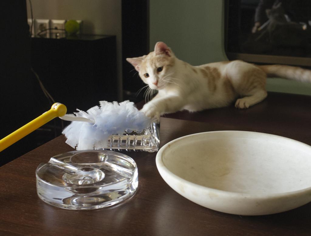 0eb86a0fed00 ΤΡΙΧΕΣ – Πετάξτε τις τρίχες και όχι…τη γάτα