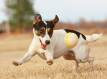 JRT_with_Ball
