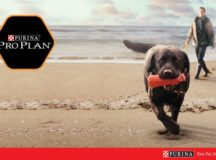 9634_Purina_Trihes_2-Advertorial_1100x685px-01