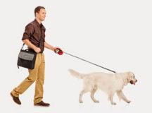 walk dog t